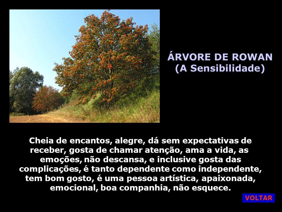 ÁRVORE DE ROWAN (A Sensibilidade)
