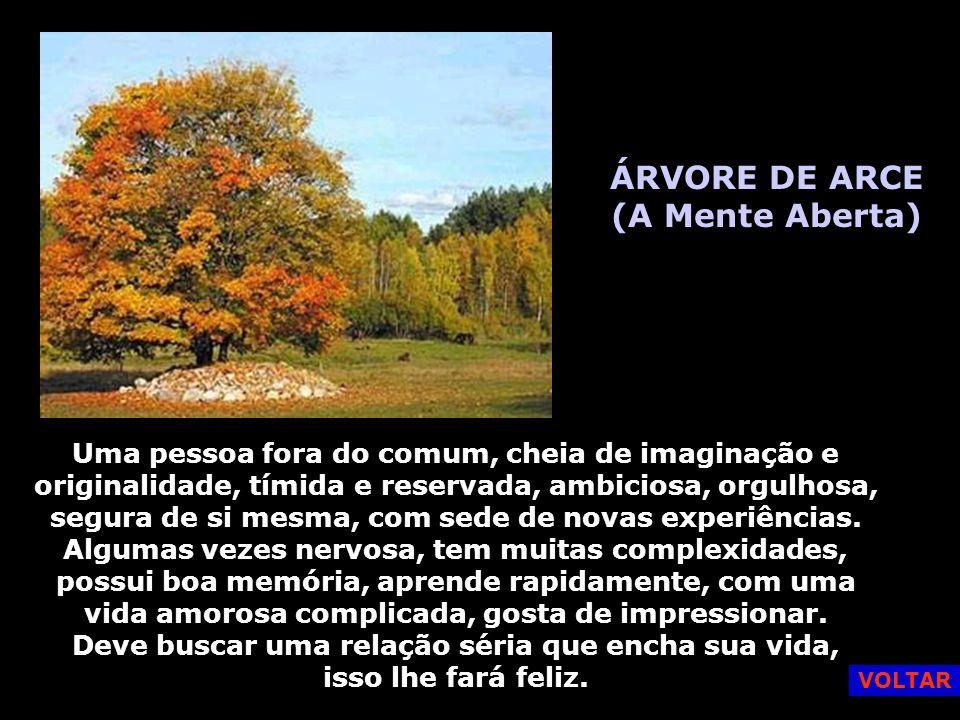 ÁRVORE DE ARCE (A Mente Aberta)