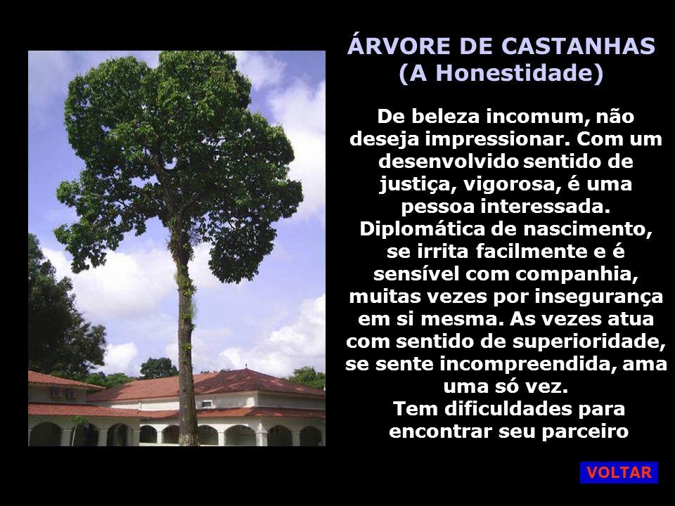 ÁRVORE DE CASTANHAS (A Honestidade)