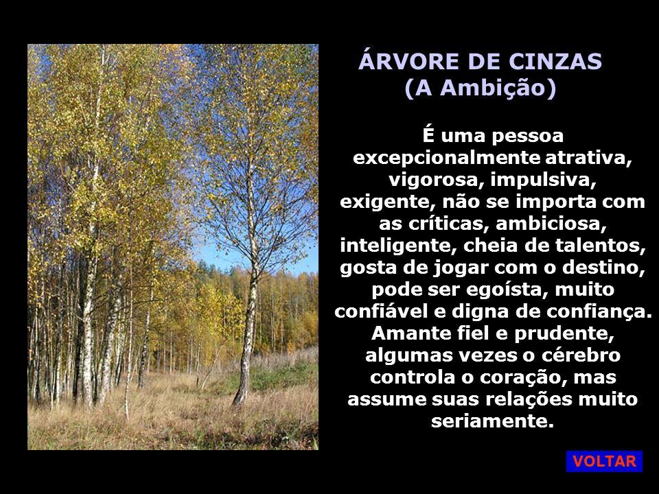 ÁRVORE DE CINZAS (A Ambição)