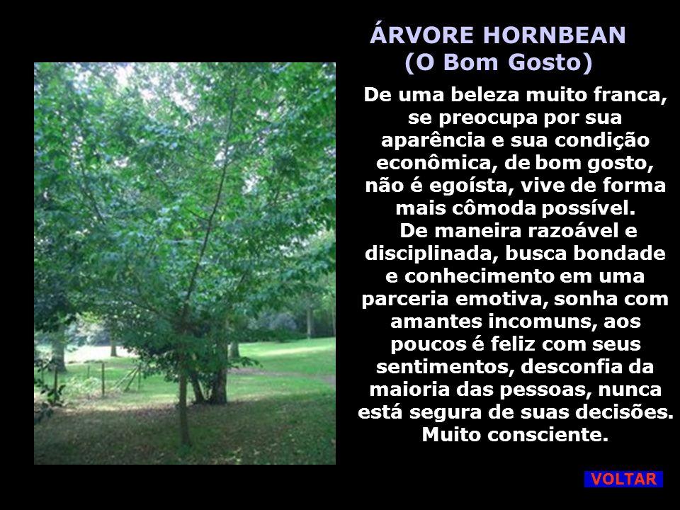 ÁRVORE HORNBEAN (O Bom Gosto)