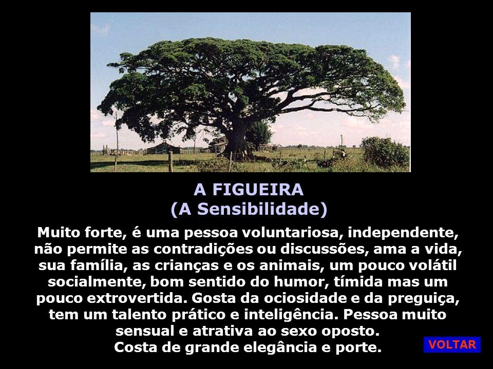 A FIGUEIRA (A Sensibilidade)