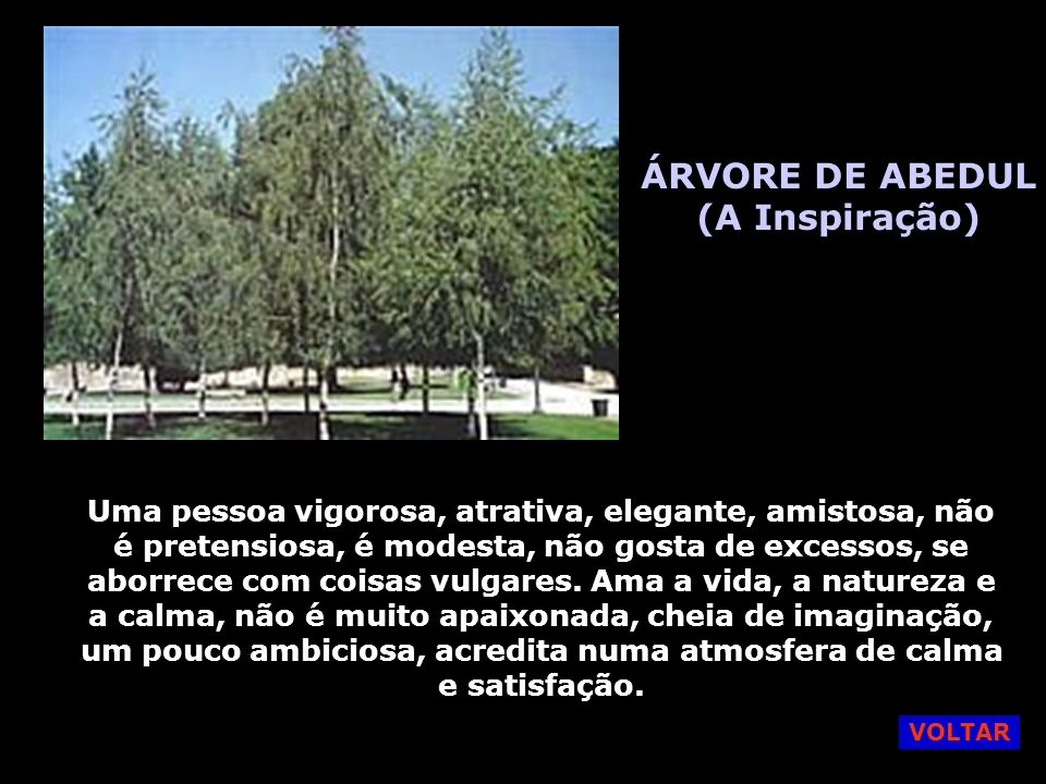 ÁRVORE DE ABEDUL (A Inspiração)