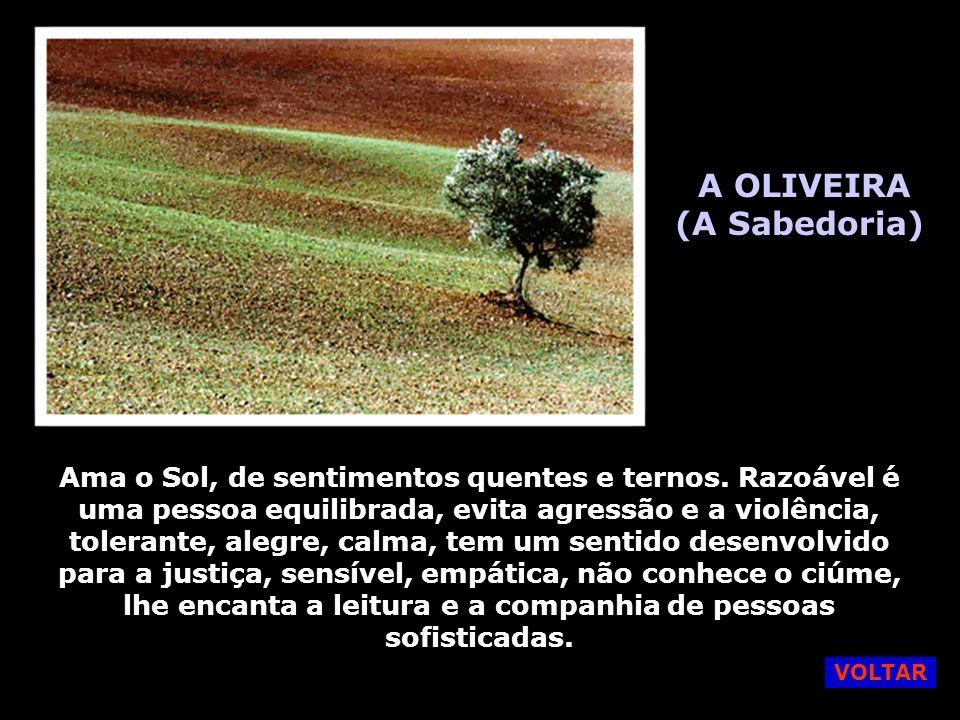 A OLIVEIRA (A Sabedoria)