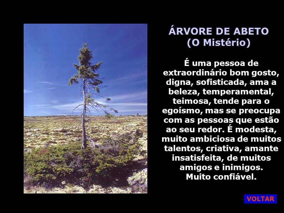 ÁRVORE DE ABETO (O Mistério)