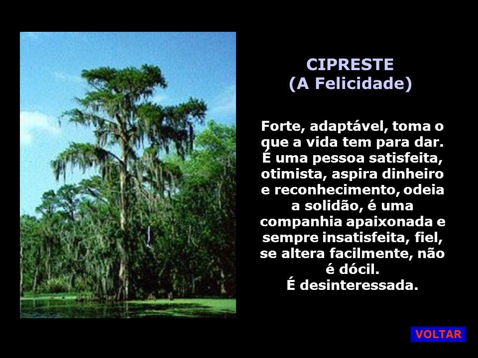 CIPRESTE (A Felicidade)