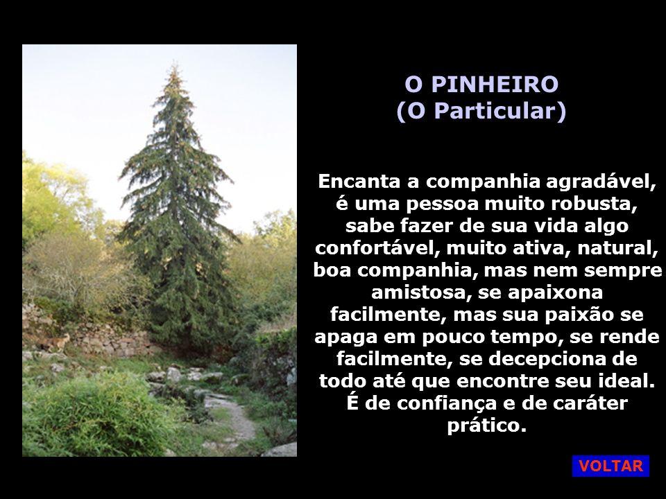 O PINHEIRO (O Particular)