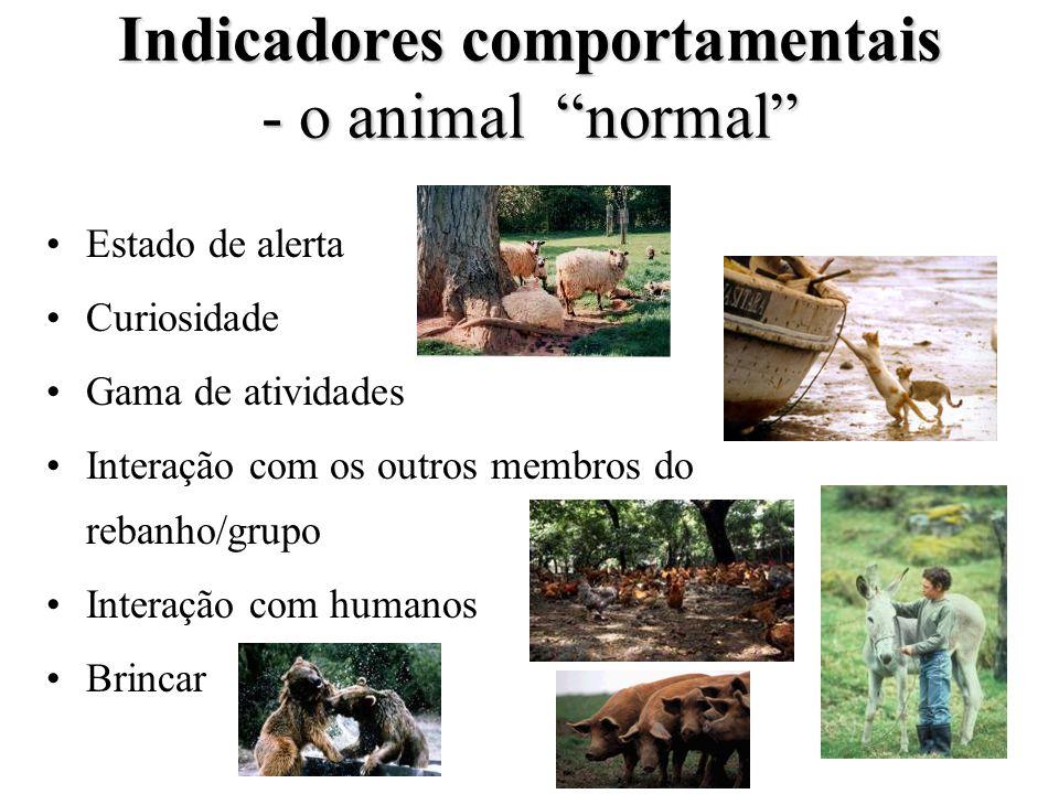Indicadores comportamentais - o animal normal