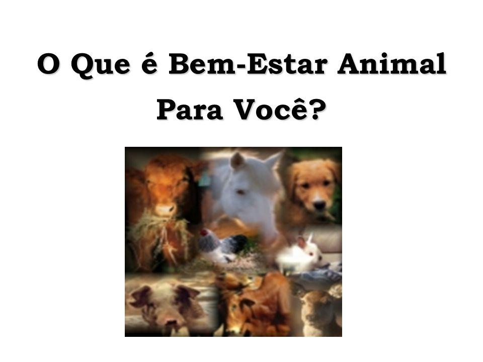O Que é Bem-Estar Animal Para Você