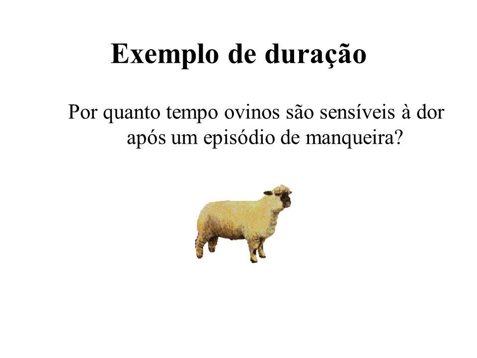 Exemplo de duração Por quanto tempo ovinos são sensíveis à dor após um episódio de manqueira