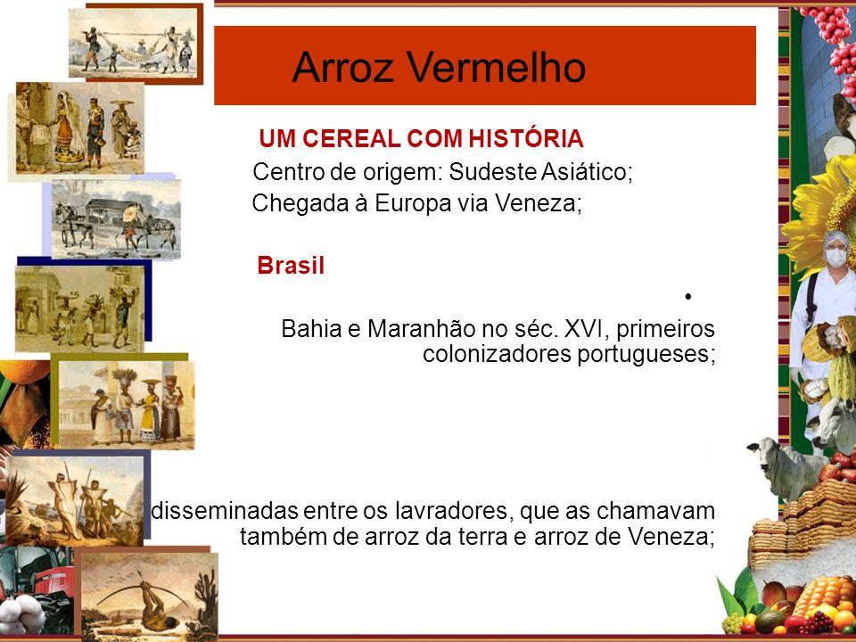 Paraíba Arroz Vermelho UM CEREAL COM HISTÓRIA