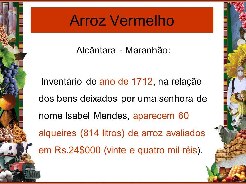 Arroz Vermelho Alcântara - Maranhão: