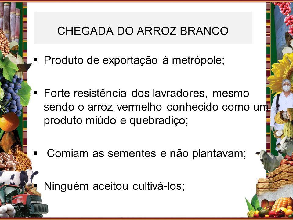CHEGADA DO ARROZ BRANCO