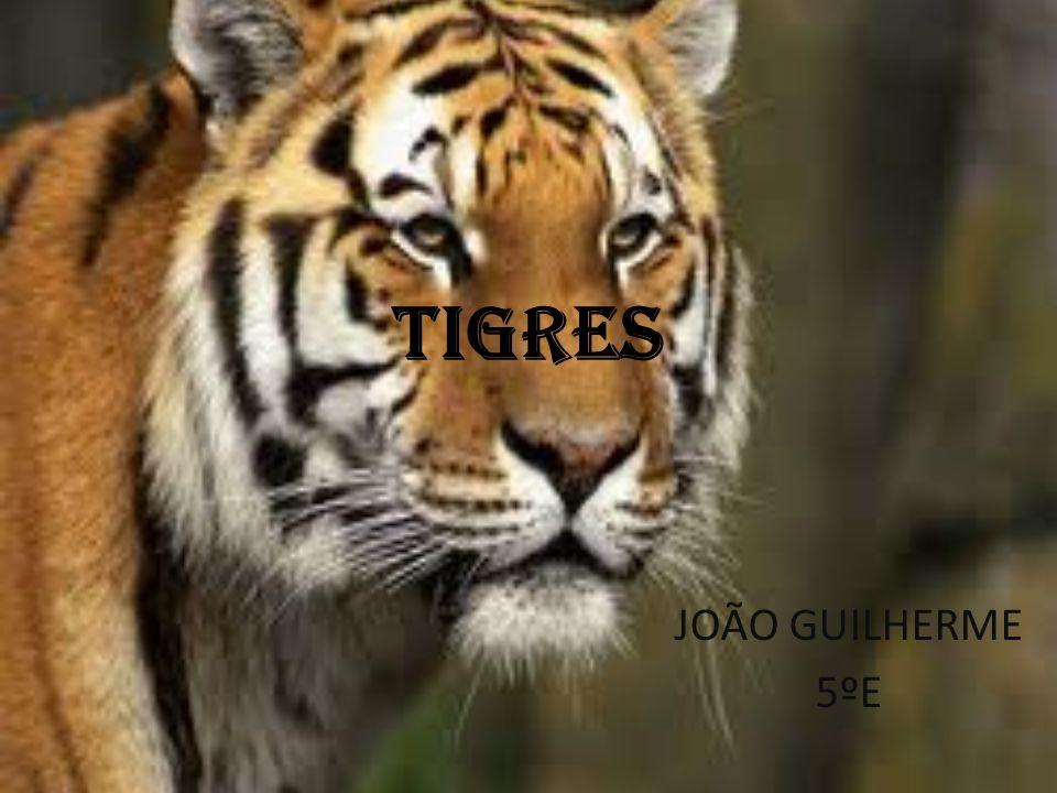 TIGRES JOÃO GUILHERME 5ºE
