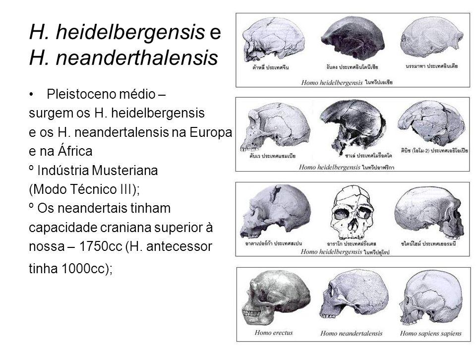 H. heidelbergensis e H. neanderthalensis