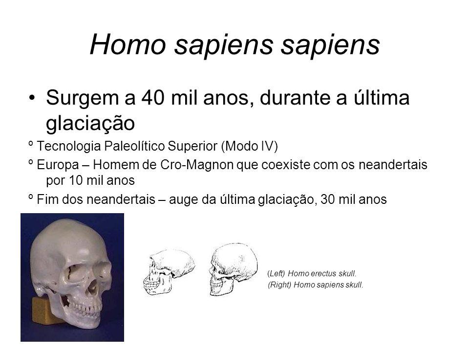 Homo sapiens sapiens Surgem a 40 mil anos, durante a última glaciação