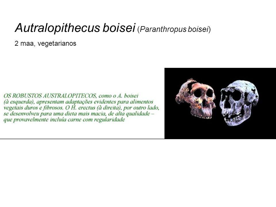 Autralopithecus boisei (Paranthropus boisei)