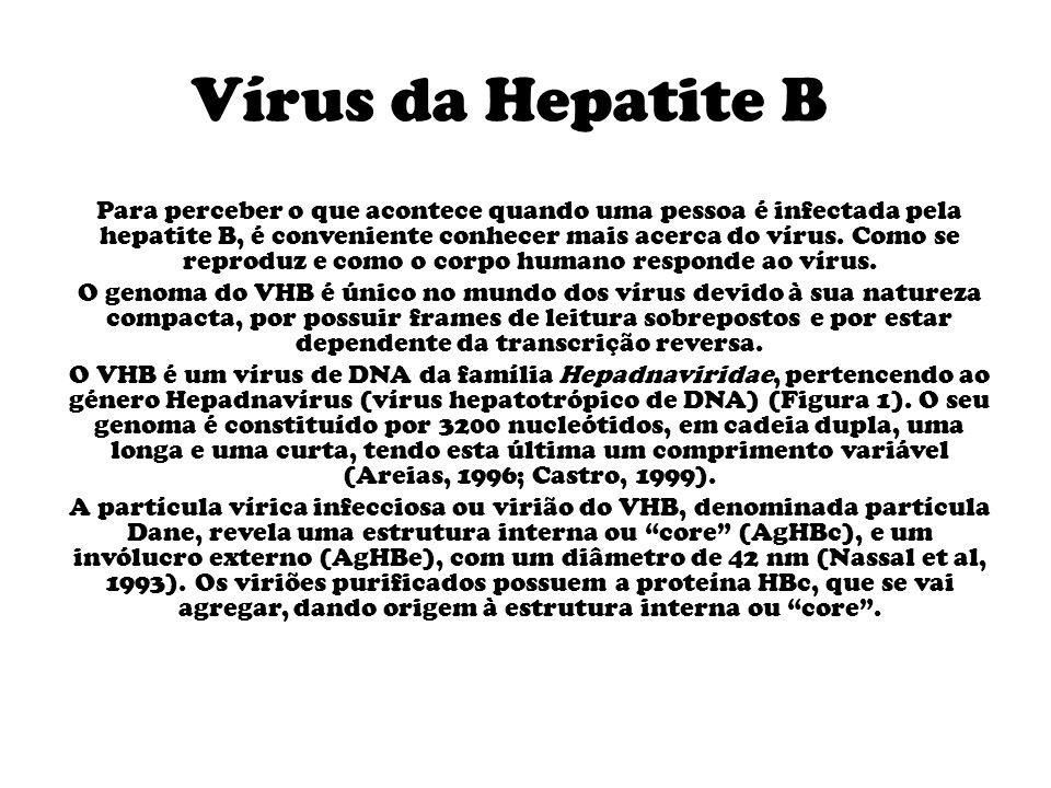 Vírus da Hepatite B