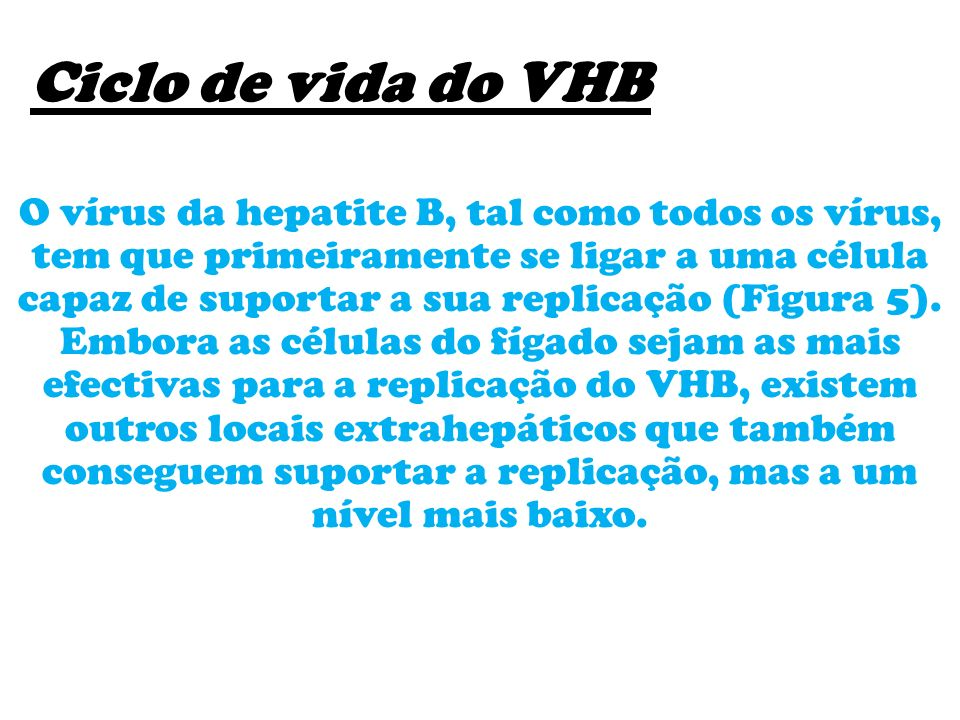 Ciclo de vida do VHB