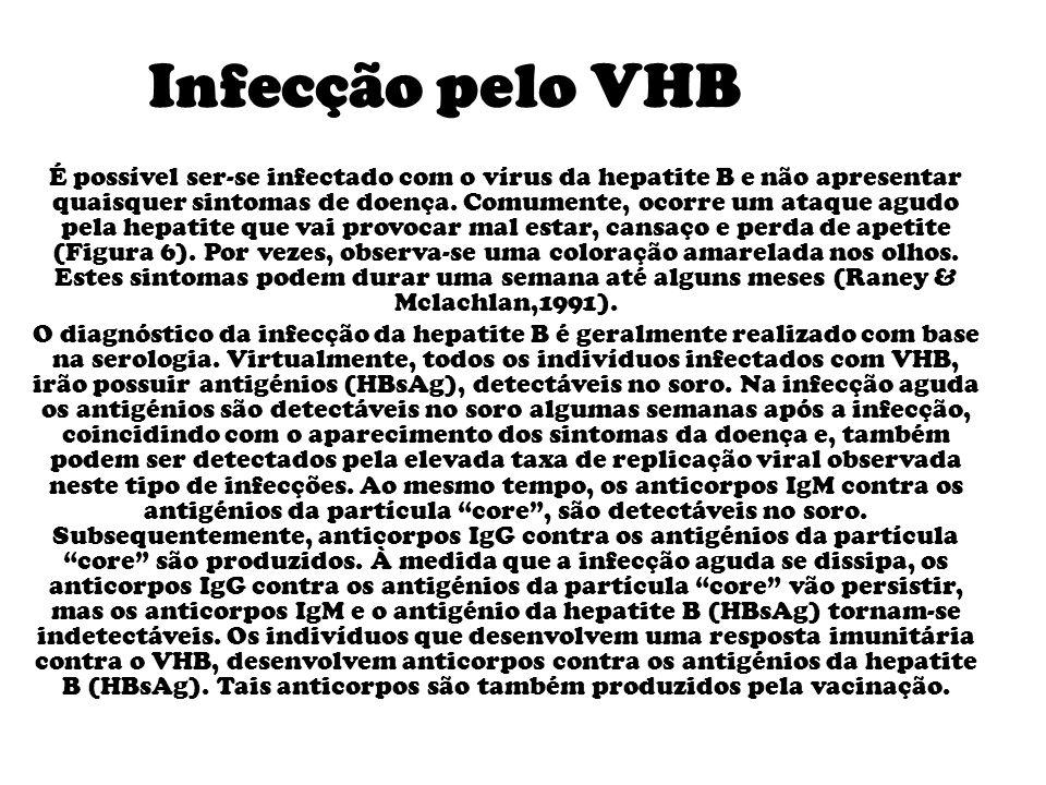 Infecção pelo VHB