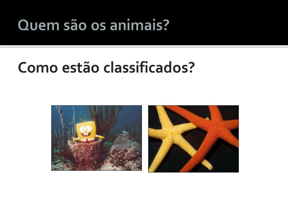 Quem são os animais Como estão classificados