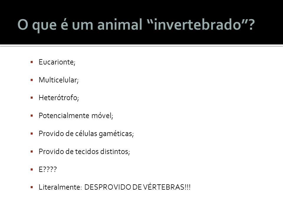 O que é um animal invertebrado