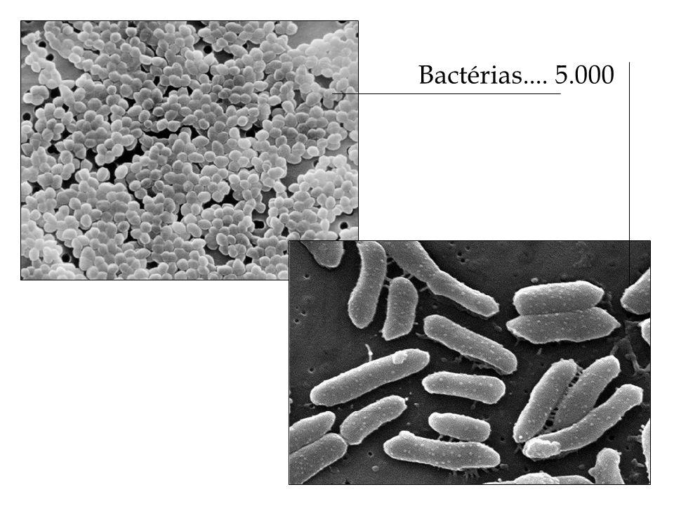 Bactérias.... 5.000