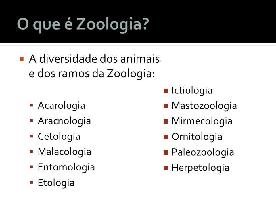 O que é Zoologia A diversidade dos animais e dos ramos da Zoologia:
