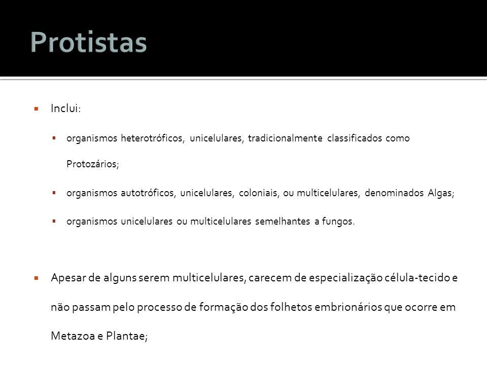 Protistas Inclui: organismos heterotróficos, unicelulares, tradicionalmente classificados como Protozários;