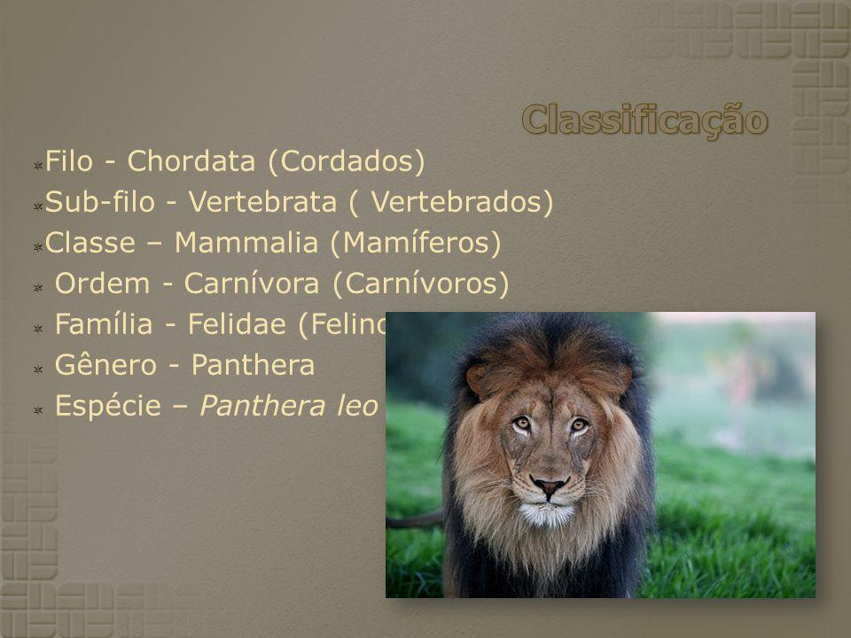Classificação Filo - Chordata (Cordados)
