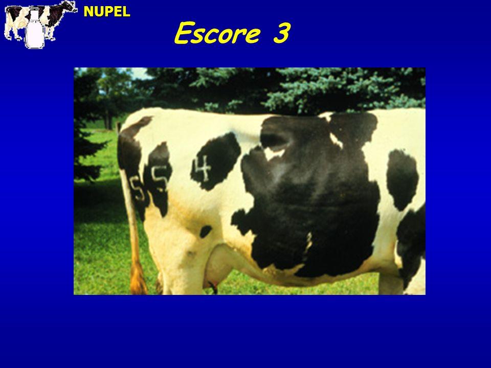 NUPEL Escore 3