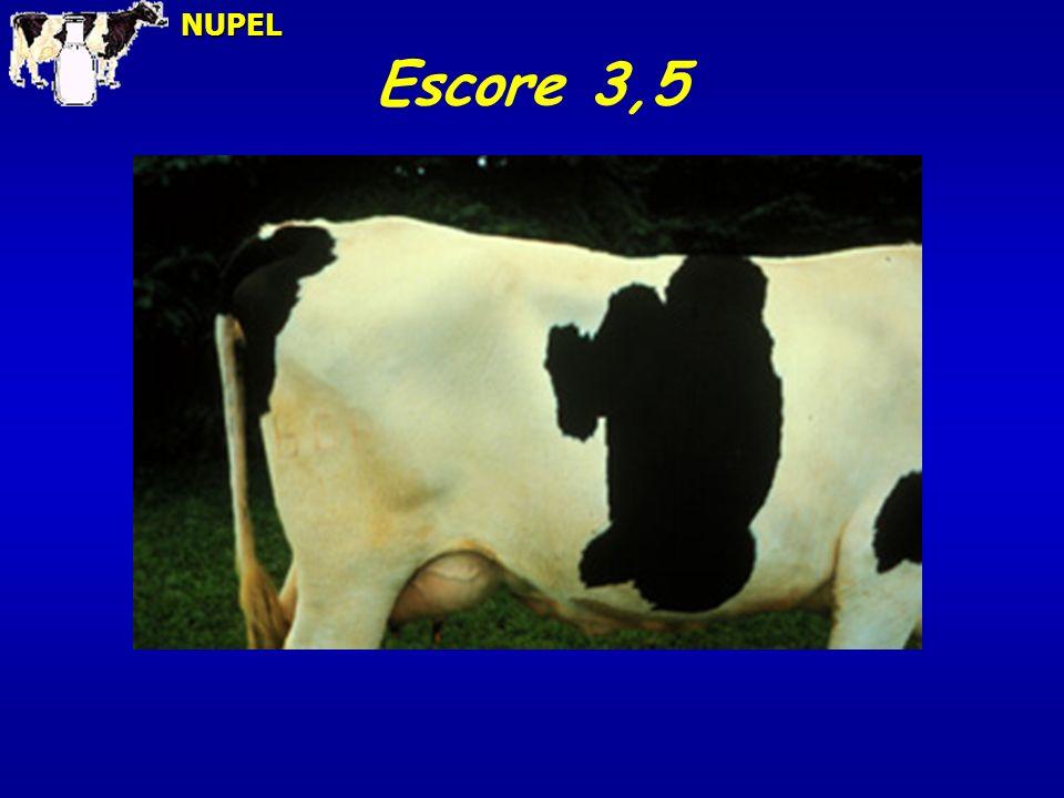 NUPEL Escore 3,5