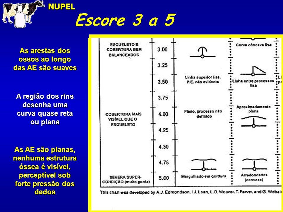 Escore 3 a 5 NUPEL As arestas dos ossos ao longo das AE são suaves