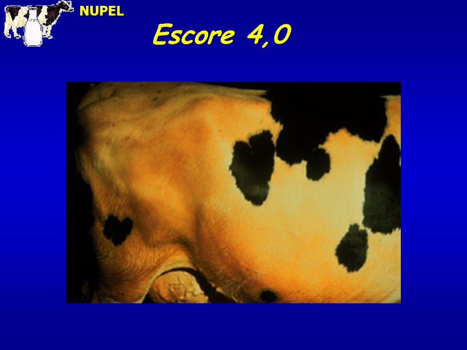 NUPEL Escore 4,0