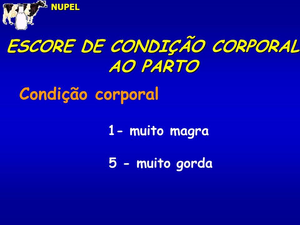 ESCORE DE CONDIÇÃO CORPORAL AO PARTO