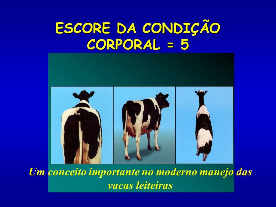 ESCORE DA CONDIÇÃO CORPORAL = 5