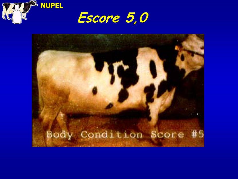 NUPEL Escore 5,0