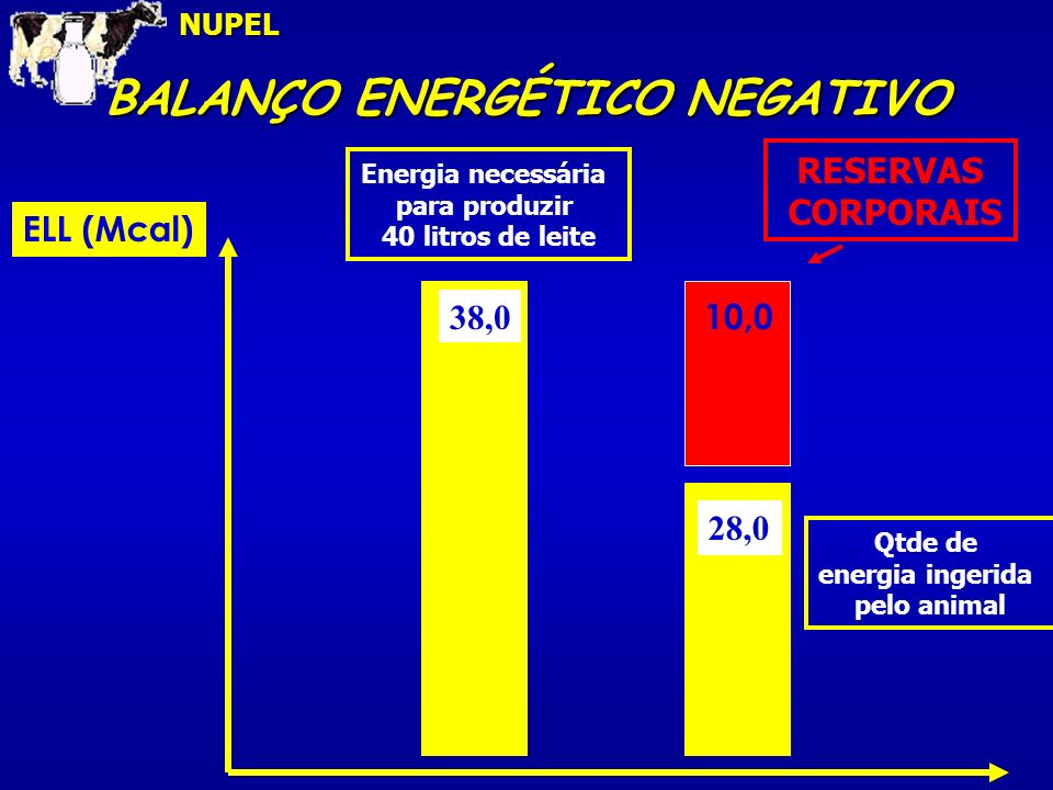 BALANÇO ENERGÉTICO NEGATIVO