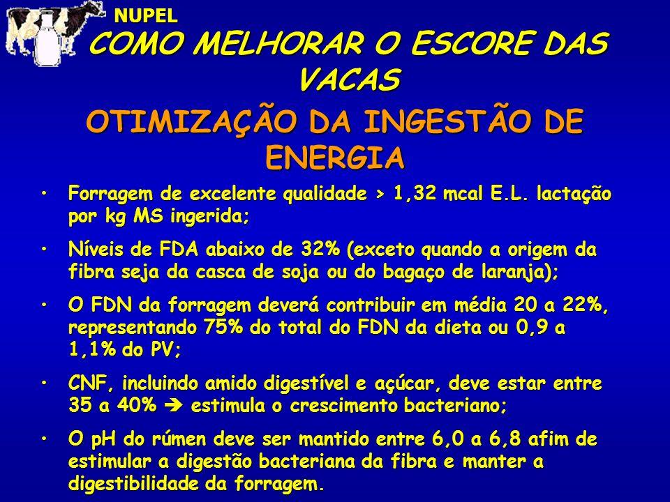 COMO MELHORAR O ESCORE DAS VACAS OTIMIZAÇÃO DA INGESTÃO DE ENERGIA