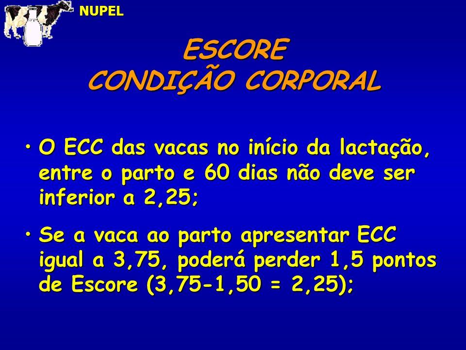 ESCORE CONDIÇÃO CORPORAL
