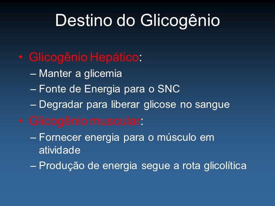 Destino do Glicogênio Glicogênio Hepático: Glicogênio muscular: