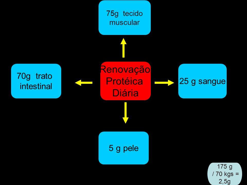 Renovação Protéica Diária 70g trato 25 g sangue intestinal 5 g pele