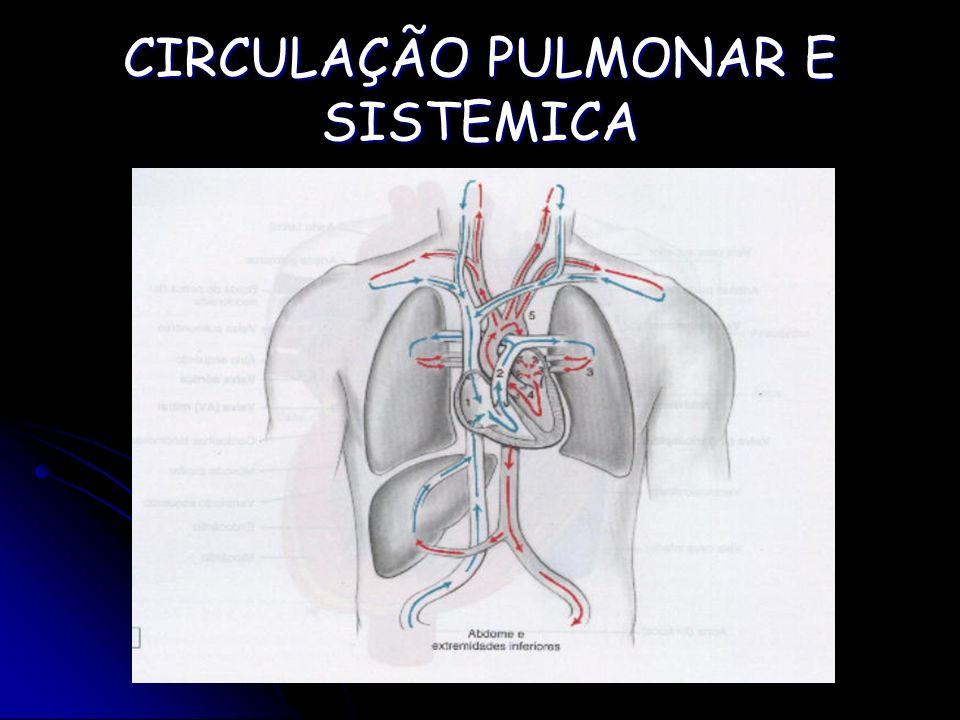CIRCULAÇÃO PULMONAR E SISTEMICA