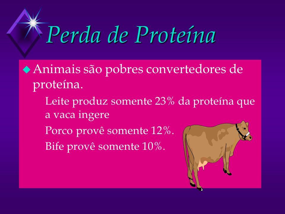 Perda de Proteína Animais são pobres convertedores de proteína.