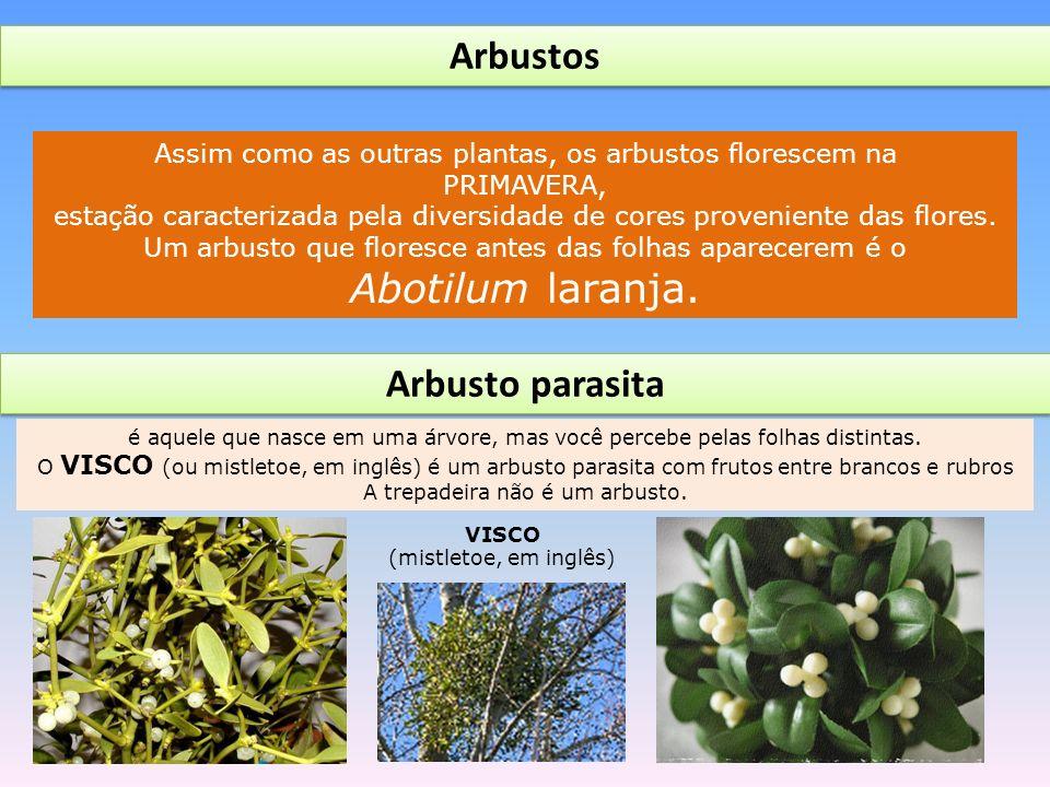 Arbustos Arbusto parasita
