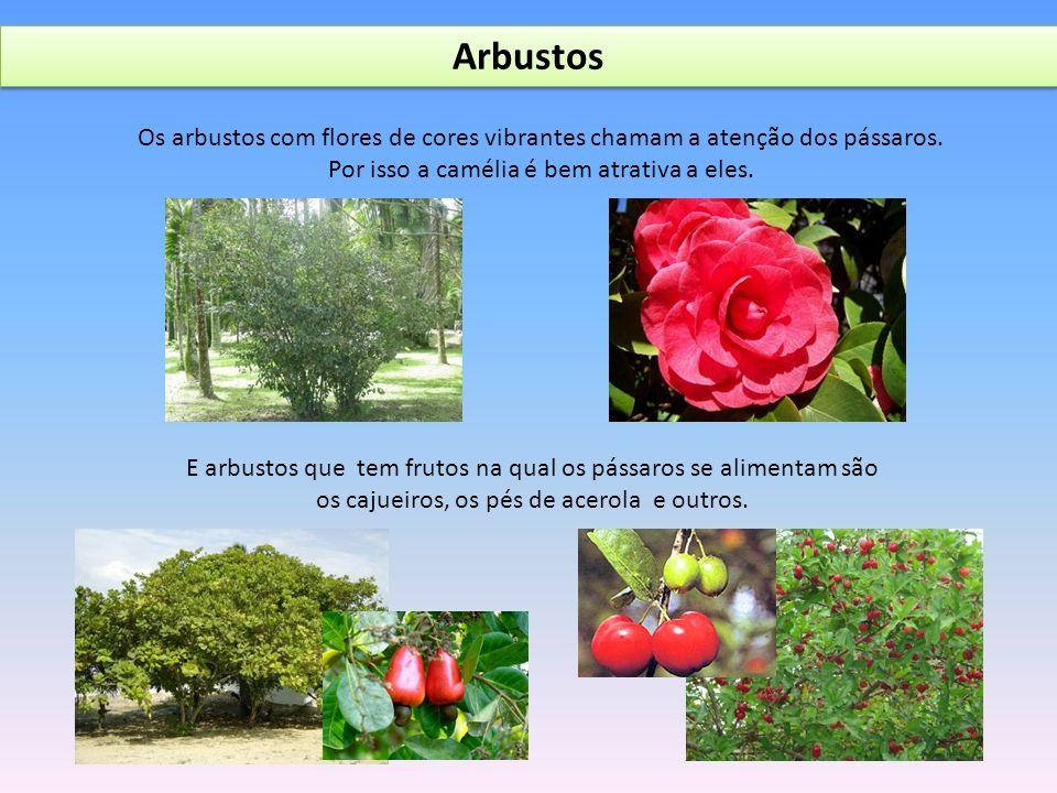 Arbustos Os arbustos com flores de cores vibrantes chamam a atenção dos pássaros. Por isso a camélia é bem atrativa a eles.