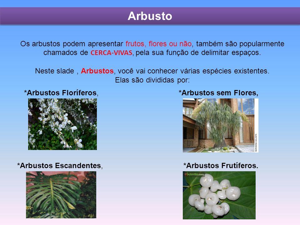 Arbusto Os arbustos podem apresentar frutos, flores ou não, também são popularmente chamados de CERCA-VIVAS, pela sua função de delimitar espaços.