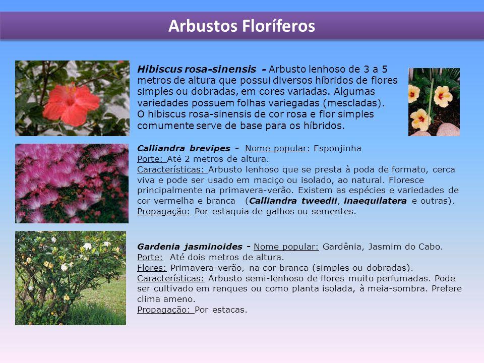 Arbustos Floríferos