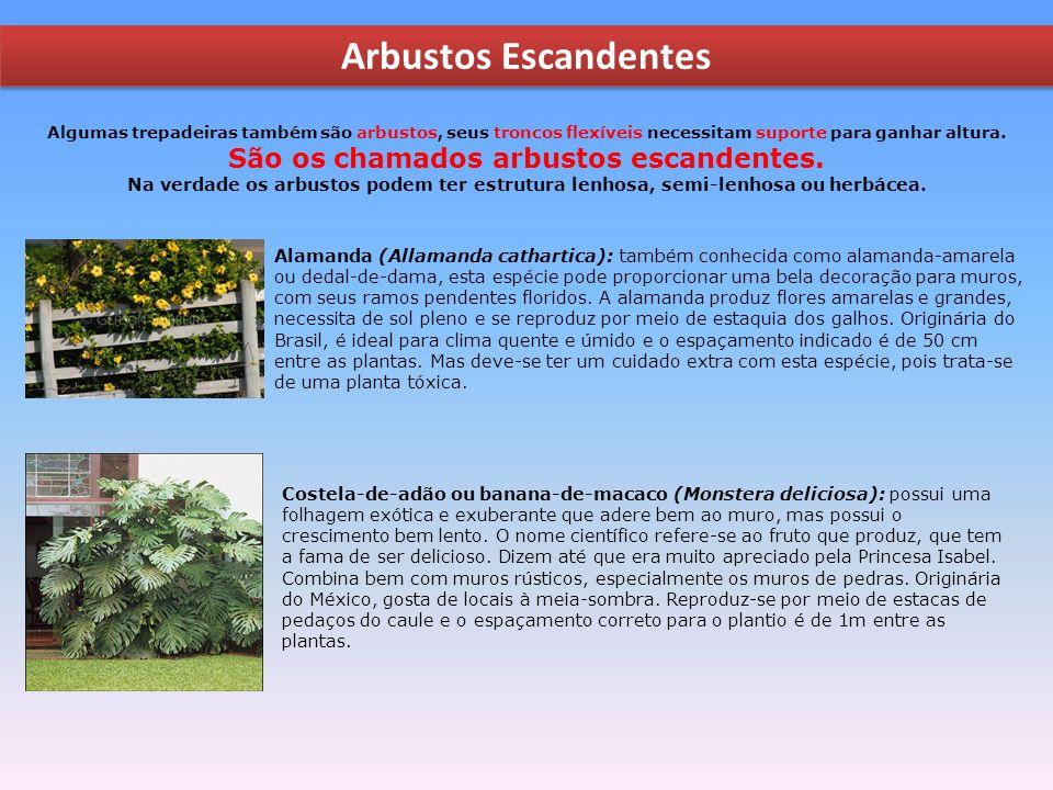 São os chamados arbustos escandentes.