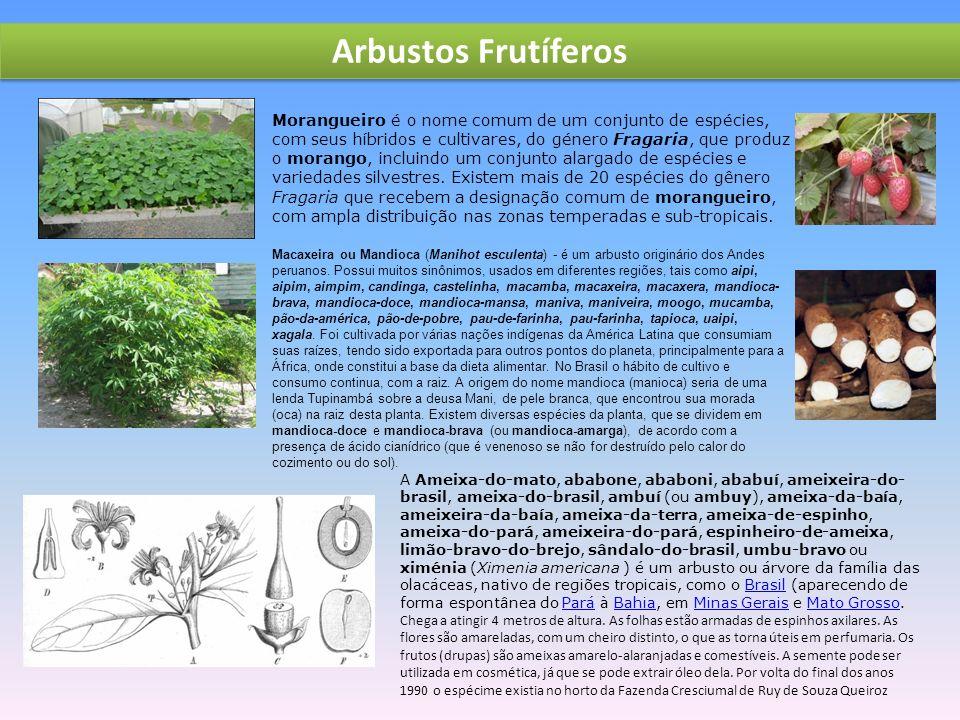 Arbustos Frutíferos